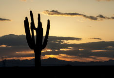 Saguaro Cactus in Arizona Sunset. A Saguaro cactus silhouetted in a beautiful Arizona sunset with mountains on the horizon. Lots of color Royalty Free Stock Image