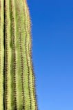 Saguaro cactus and blue sky Stock Photos