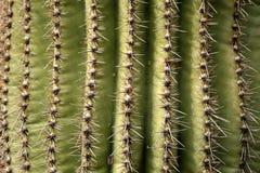 Saguaro Cactus Closeup Stock Photo