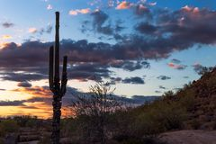 Saguaro cactus desert sunset. Saguaro cactus silhouette against a Sonoran Desert background royalty free stock photos