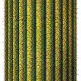 Saguaro Cactus Royalty Free Stock Images
