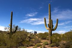 Saguaro cactus forest and Airstream RV Campsite royalty free stock photography