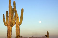 Saguaro Cactus and Full Moon Stock Photo