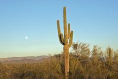 Saguaro Cactus With Full Moon Stock Photos