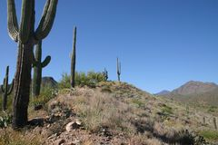 Saguaro cactus and hills royalty free stock photo