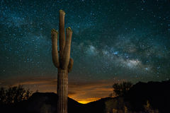 Saguaro Cactus and Milky Way Stock Image