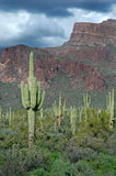 Saguaro Cactus and Mountains 1 Stock Photo