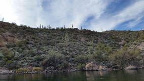 Saguaro Cactus. Multi-armed Saguaro cacti blanket the peaceful scene at Canyon Lake, Arizona royalty free stock images