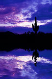 Saguaro Cactus and Reflection Royalty Free Stock Photography