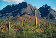 Saguaro cactus, and rocky cliffs and ridges, Stock Photos