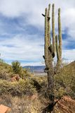 Saguaro cactus, scrub bushes and Theodore Roosevelt lake view, stock image
