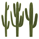 Saguaro Cactus Set Royalty Free Stock Image