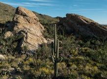 Early evening at Saguaro National Park royalty free stock photos
