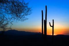 Saguaro cactus sunset. A setting sun on a Saguaro cactus in the Sonora Desert near Phoenix, AZ Royalty Free Stock Photos