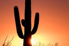Saguaro Cactus at Sunset Stock Photography