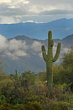 Saguaro Cactus and Superstition Mountains 3 Royalty Free Stock Image