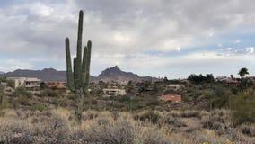 Saguaro Cactus trees in desert community Fountain Hills. Near Scottsdale, Arizona,USA stock video footage