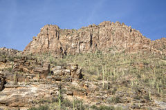 Saguaro Canyon Stock Photo