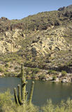 Saguaro at Canyon Lake, Arizona Royalty Free Stock Images
