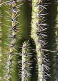 Saguaro Close Up stock photos