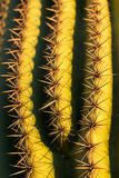 Saguaro Close-Up Stock Photography