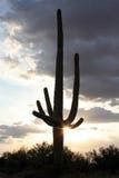 Saguaro con Sun Fotografía de archivo libre de regalías