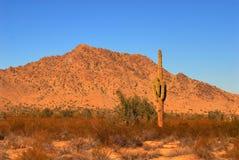 Saguaro de lever de soleil Images stock