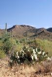 saguaro de stationnement national Photo libre de droits