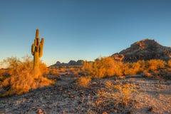 Saguaro della montagna della sella fotografia stock