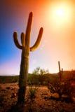 Saguaro di alba Fotografie Stock Libere da Diritti