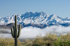 Saguaro e quatro picos Imagens de Stock