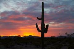 Sol poniente del Saguaro Fotos de archivo libres de regalías