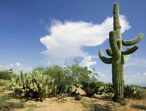 Saguaro en Wolk Stock Foto