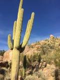 Saguaro estupendo Cactud Imágenes de archivo libres de regalías