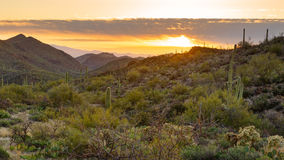 Saguaro Forest Sunrise Royalty-vrije Stock Foto