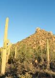 Saguaro Hills Stock Photos