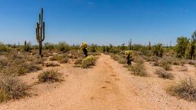 Saguaro i Cholla kaktusy w Arizona pustyni Fotografia Stock