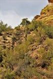 Saguaro Jeziorny rezerwuar, Maricopa okręg administracyjny, Arizona, Stany Zjednoczone Zdjęcia Royalty Free
