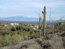 Saguaro-Kakteen, Ocatilllo und die vier Spitzen lizenzfreies stockbild