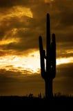 Saguaro kaktusów Arizona Kaktusowa pustynia Obrazy Royalty Free
