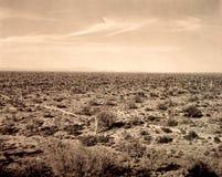 Saguaro kaktusów krajobraz Fotografia Stock