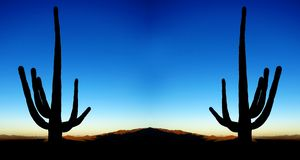 Saguaro kaktusów wschód słońca w pustyni Obraz Stock