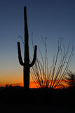 Saguaro-Kaktus bei Sonnenuntergang Lizenzfreies Stockfoto