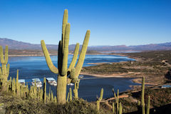 Saguaro kaktus nad Roosevelt jezioro Zdjęcia Royalty Free