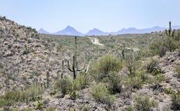 Saguaro kaktusa pustyni góry, Kolosalny jamy góry park, Arizona zdjęcie stock