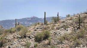 Saguaro kaktusa pustyni krajobraz, Arizona usa Zdjęcia Royalty Free