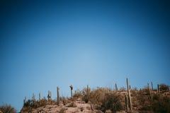 Saguaro kaktusy w Arizona Obraz Royalty Free