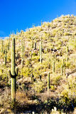 Saguaro National Par Royalty Free Stock Photography