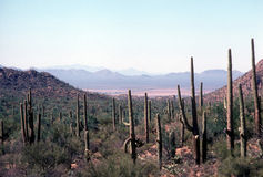 Saguaro national park. View across the sonoran desert from saguaro national park looking toward tucson, arizona Stock Photos