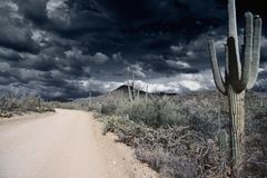 Saguaro national park Stock Photo